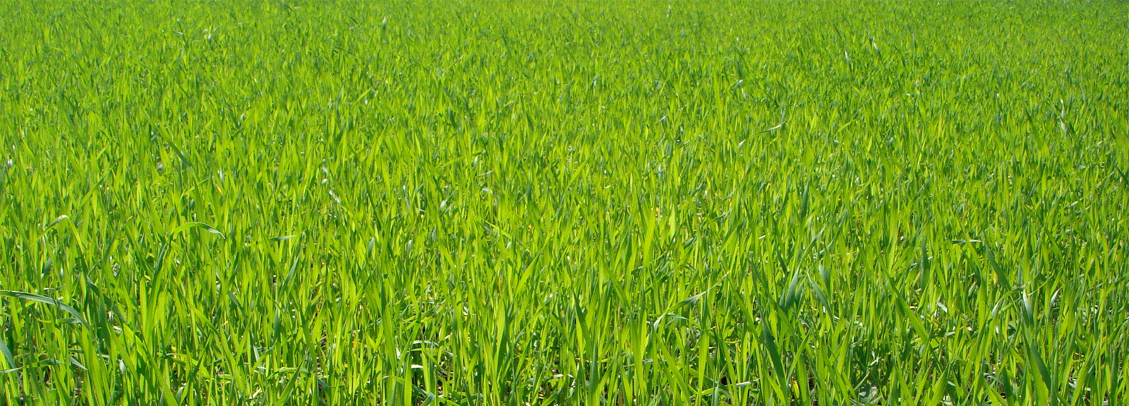 succeed-content-boring-industry-grass-grow